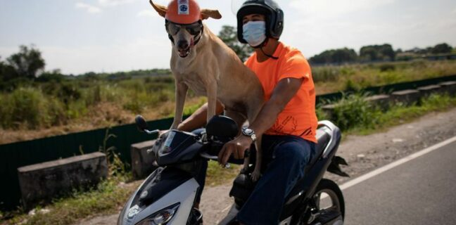 Moto Pes