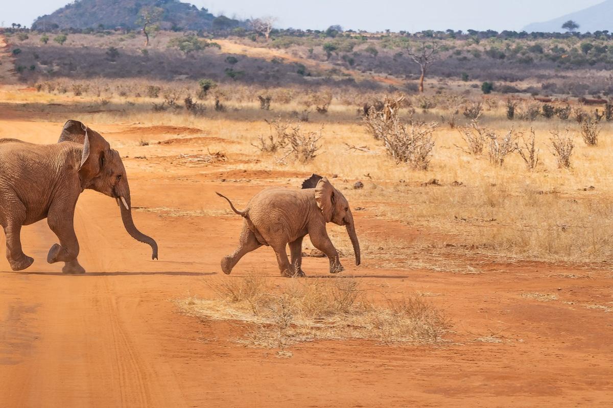africké safari - sloni