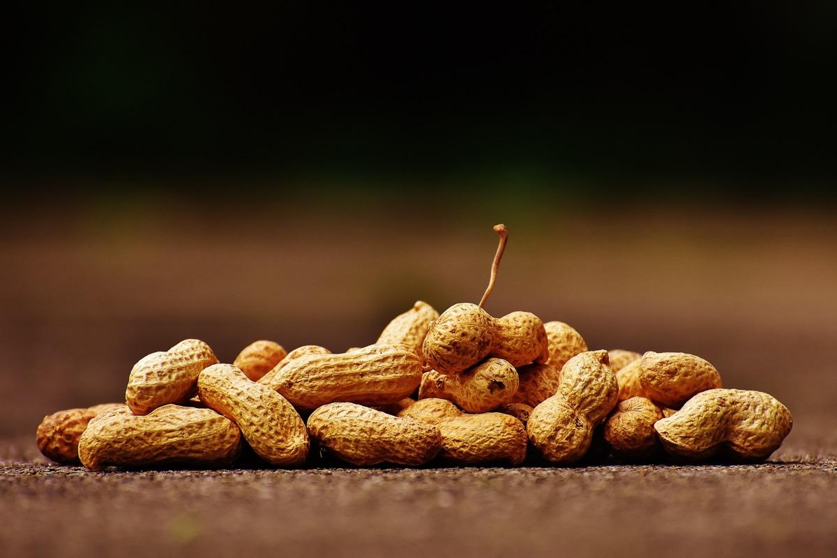 9 druhů ořechů - arašídy