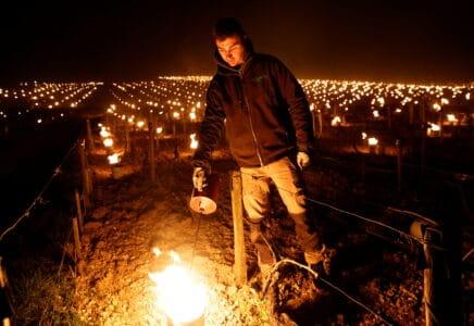 Vinaři ve vinicích zapalují louče, aby ochránili úrodu