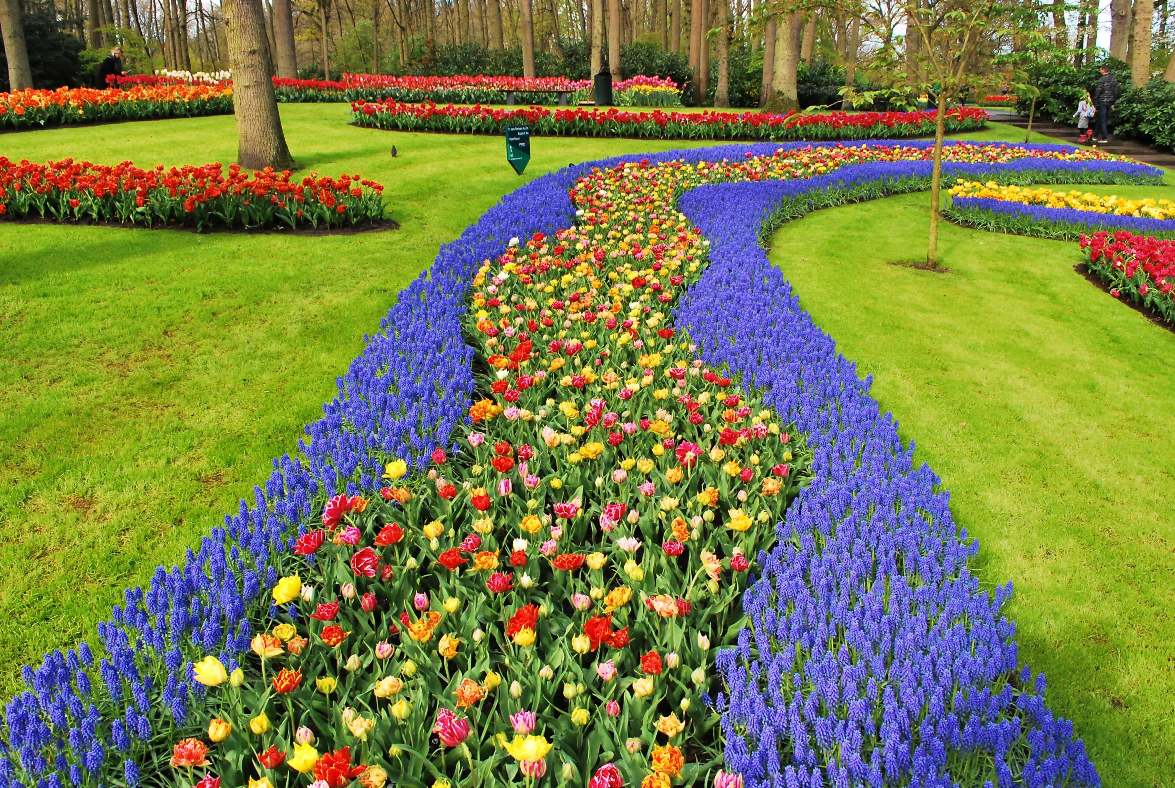 festival tulipánů Keukenhof
