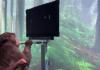 Makak hraje telepaticky pong