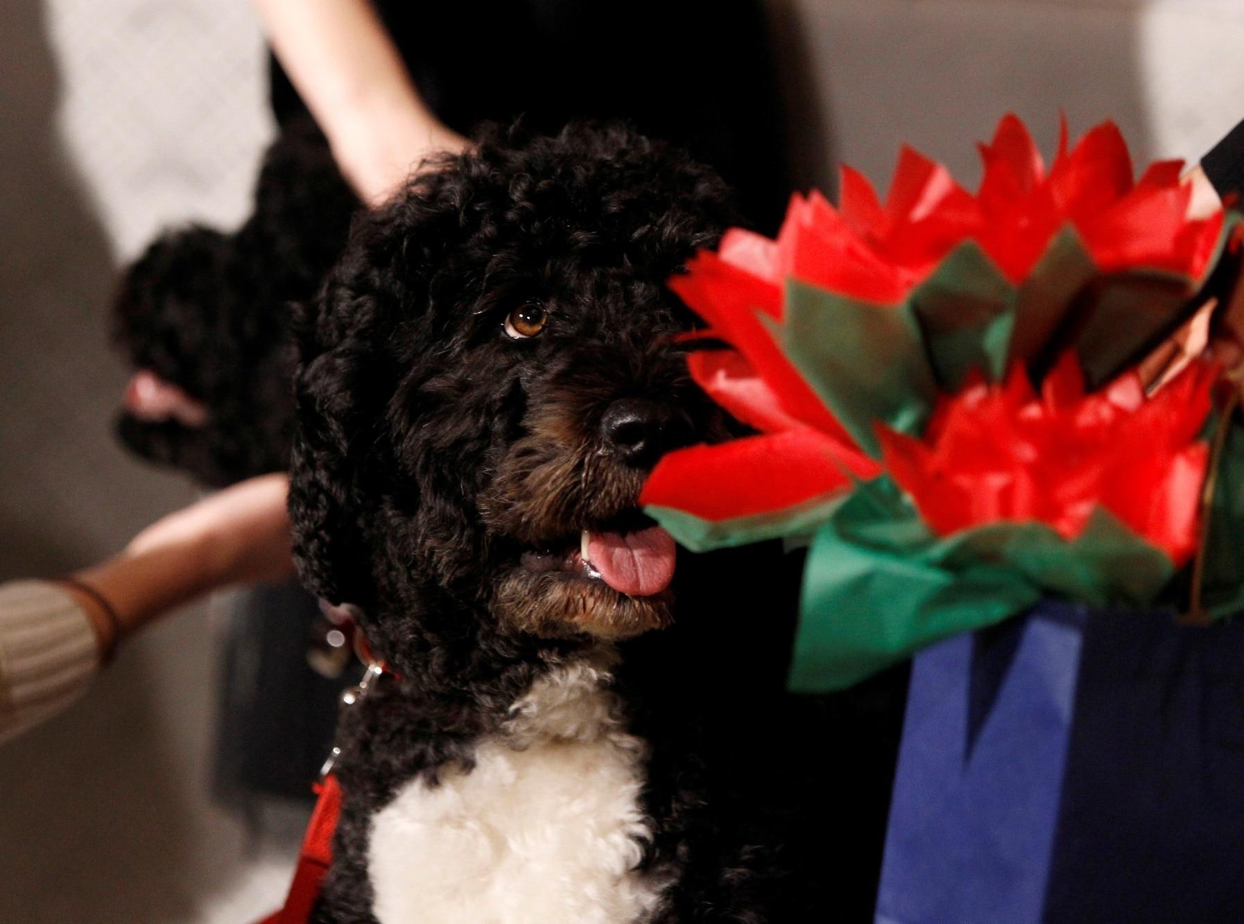 Pes Baracka Obamy Bo
