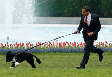 Zemřel Bo, pes Baracka Obamy