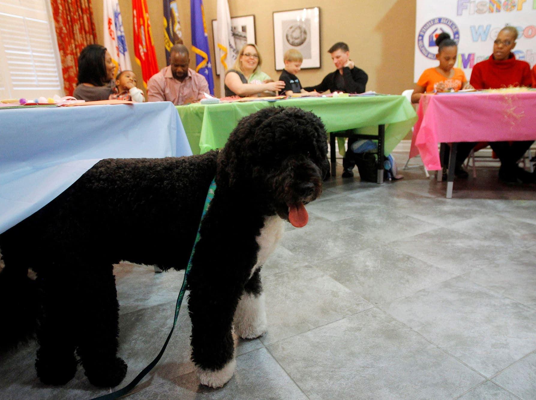 První pes Bo
