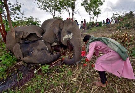 18 uhynulých slonů v Indii