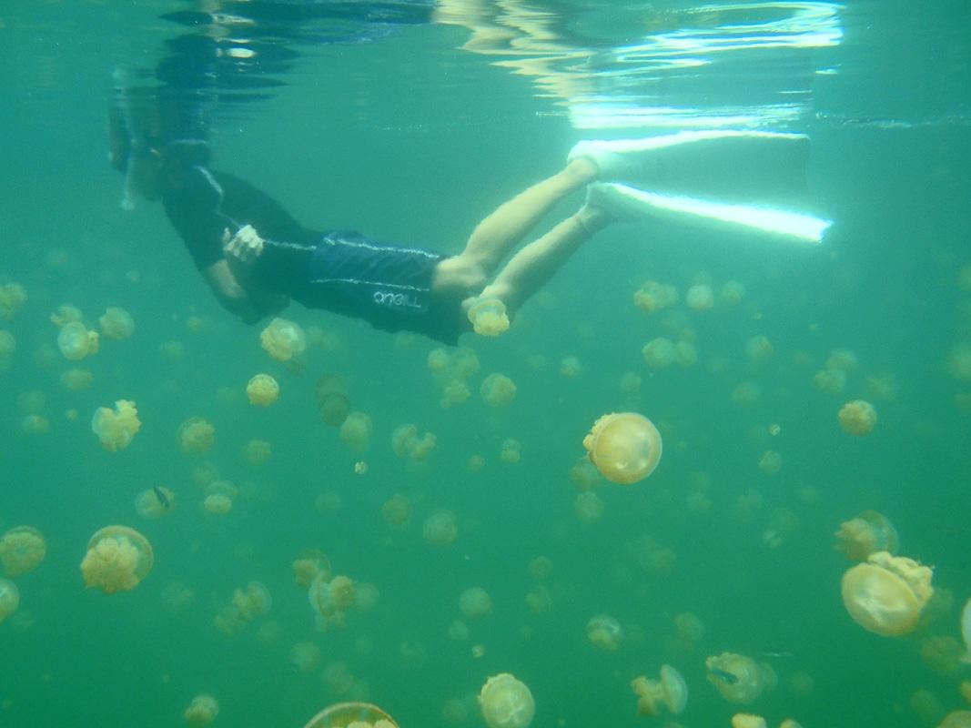 jezero medúz