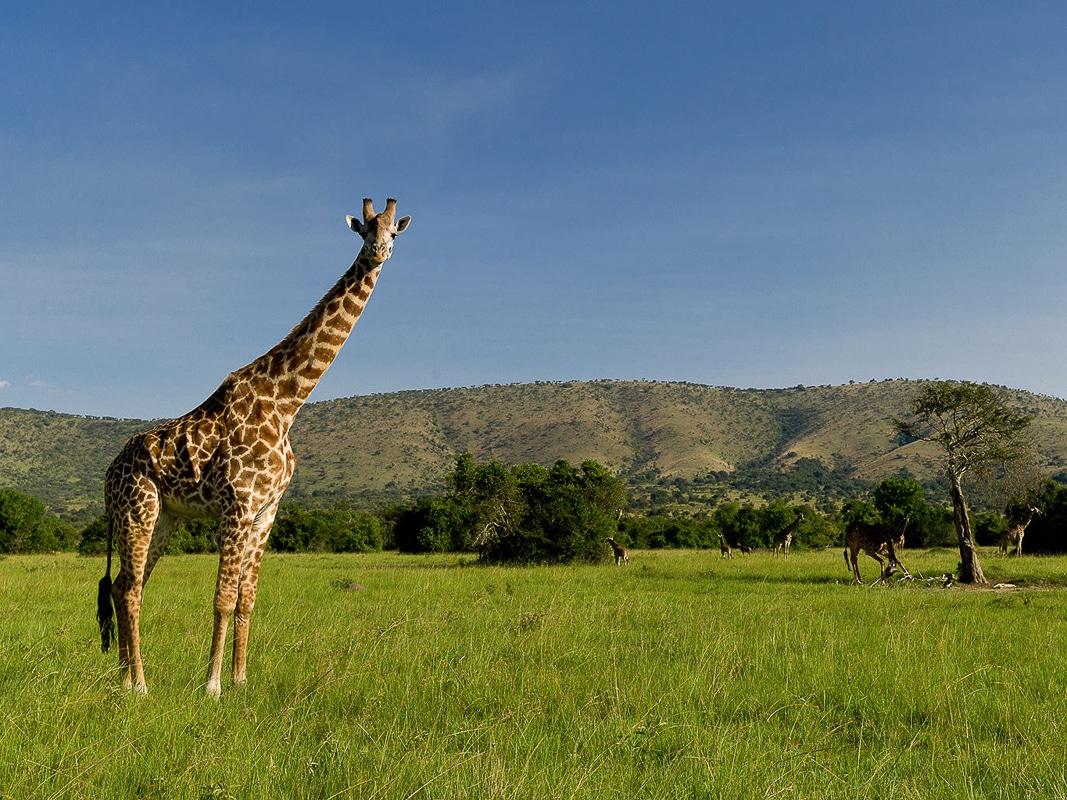 proč navštívit Rwandu