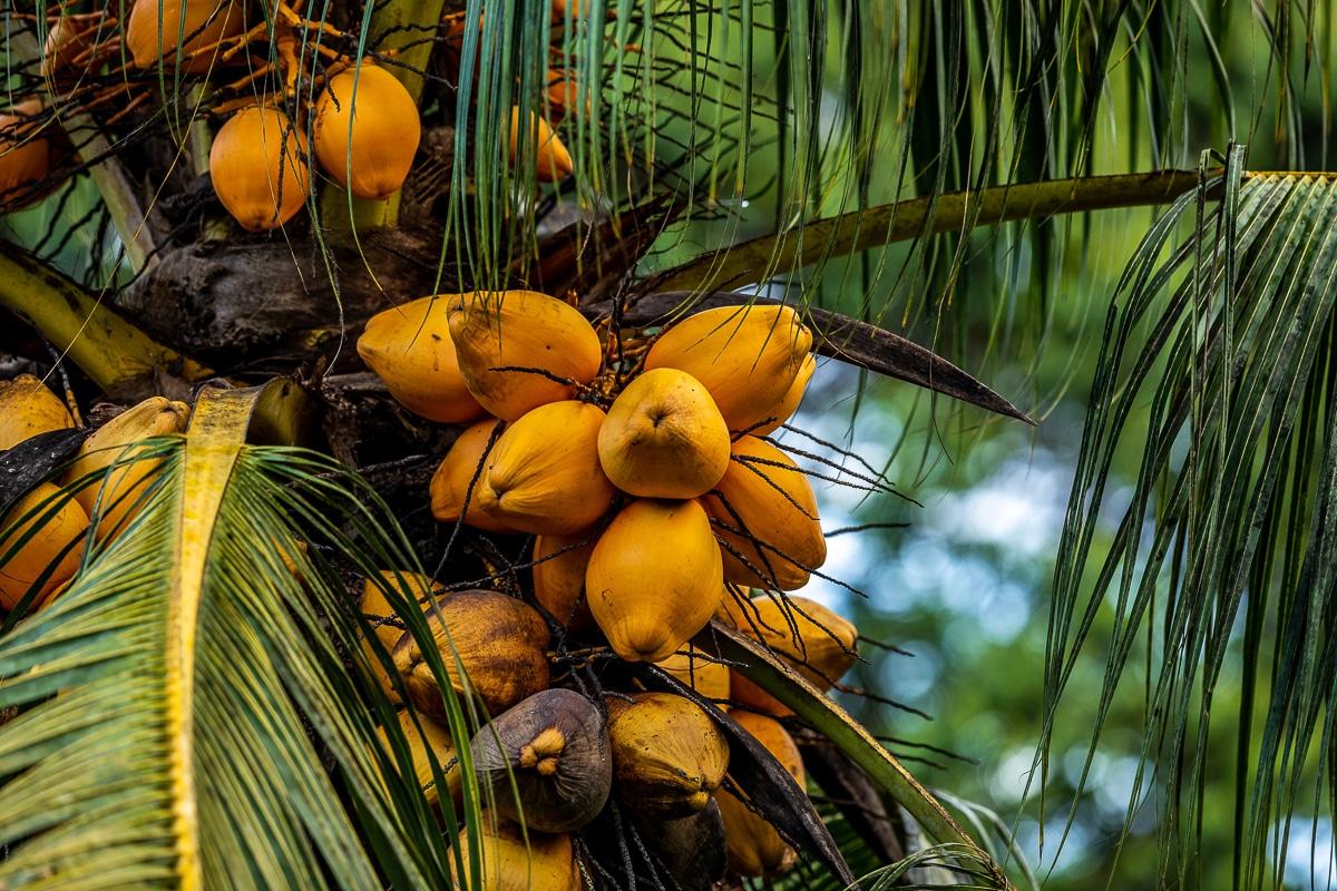 Kostarika nejšťastnější zemí světa