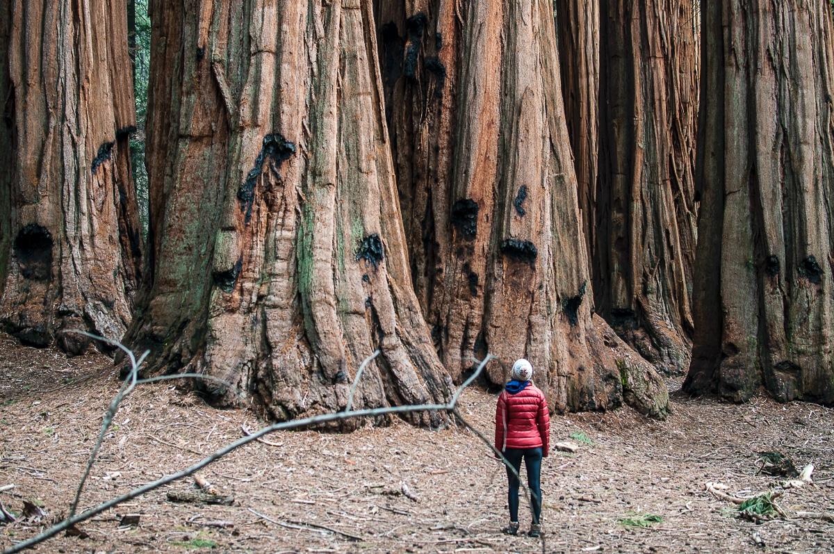 Magické i bizarní lesy