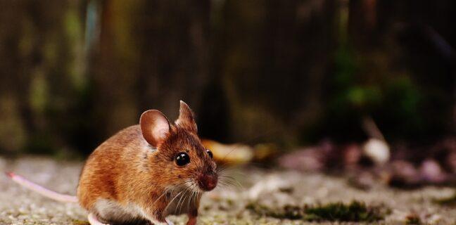 Zvířata se přizpůsobují změně klimatu
