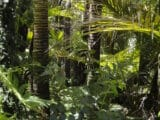 Deštný prales Amazonie